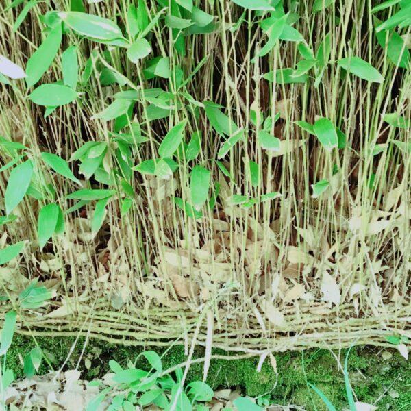 根は繋がっている